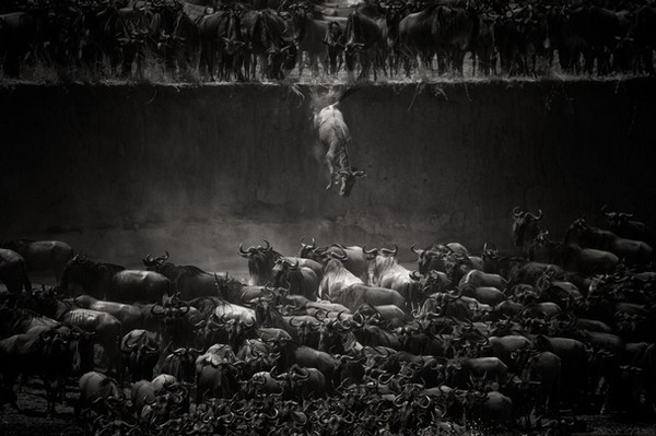 cuoc thi anh national geographic